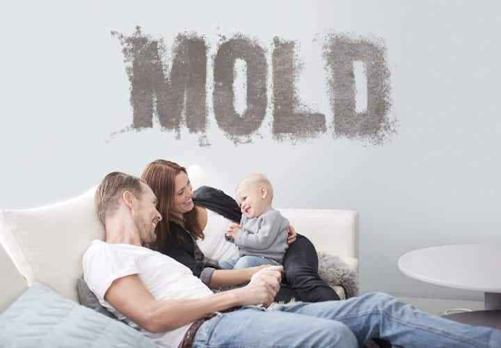 6 Types of Harmful Mold That May Be Lurking in Your Home