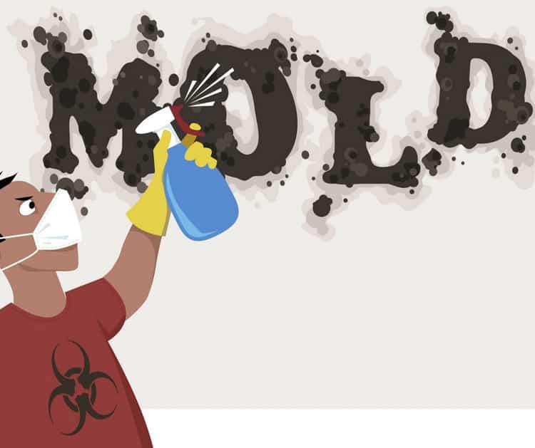 Dangerous Mold in Home